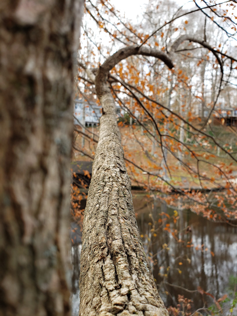 After Thanksgiving, A Hike Around The Lake 2
